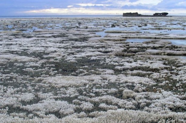 Low tide bleaching